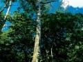 Floresta2.jpg